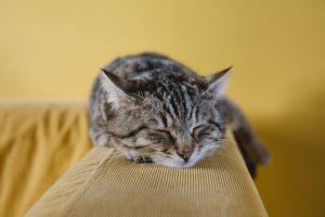 休憩する猫